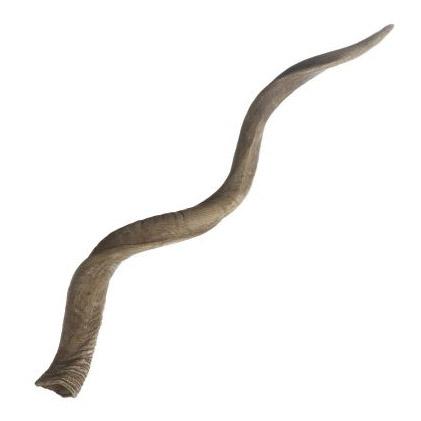 Pulp Home – Kudu Horn