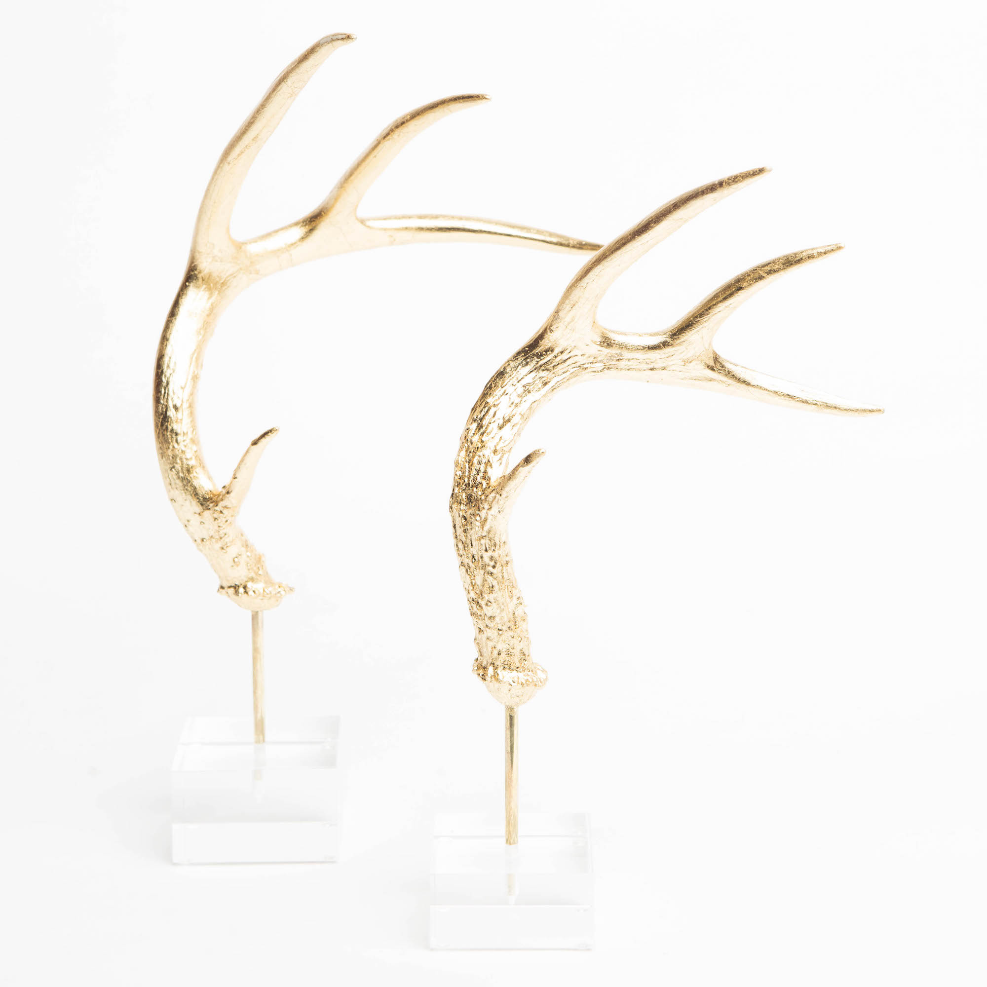 Pulp Home - Acrylic Antler Mounts