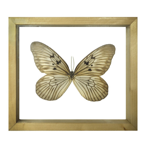 Pulp Home - Encased Butterfly - Tan