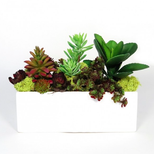 Pulp Home -  Mixed Succulents and Moss in White Gloss Rectangular Ceramic Container