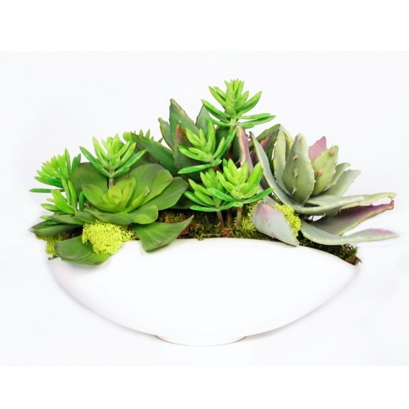 Pulp Home - Mixed Succulents and Mosses in White Ceramic Oval Container