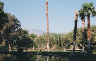 Design from Afar: Two Bunch Palms